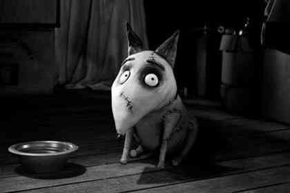 Frankenweenie - Picture 4