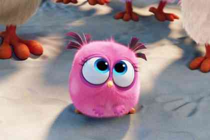 Angry Birds - Picture 3
