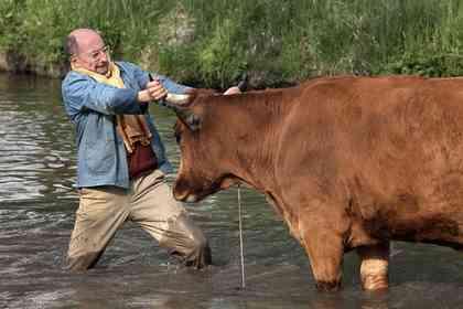 La Vache - Picture 2