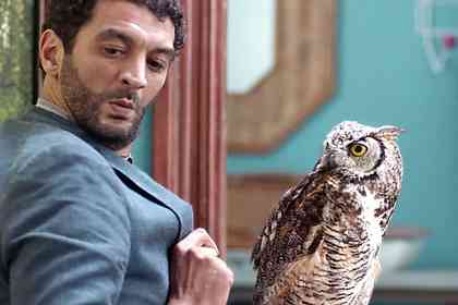 Hibou - Picture 4