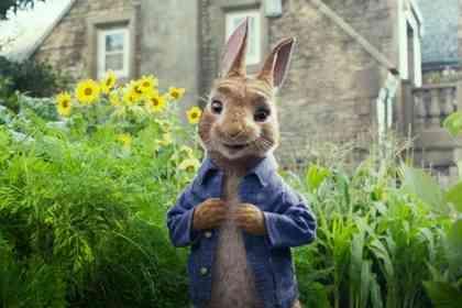 Peter Rabbit - Picture 3