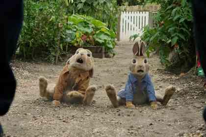 Peter Rabbit - Picture 4