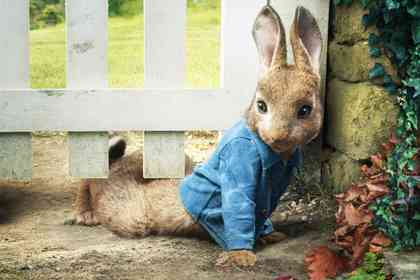 Peter Rabbit - Picture 6