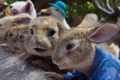 Peter Rabbit 2 - Picture 3