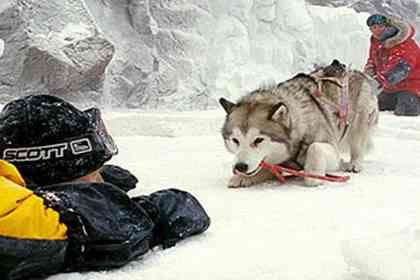 Eight Below - Picture 2