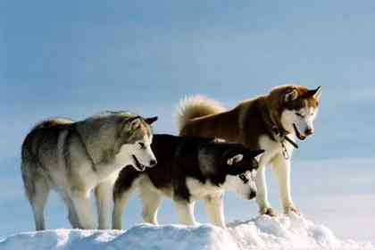 Eight Below - Picture 4