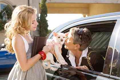 Beverly Hills Chihuahua - Picture 2