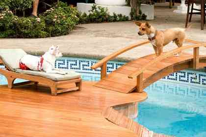 Beverly Hills Chihuahua - Picture 3