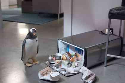 Mr. Popper's Penguins - Picture 4