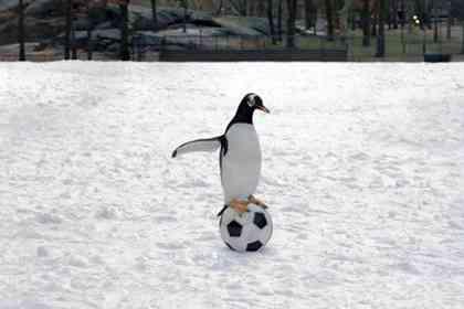 Mr. Popper's Penguins - Picture 5