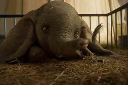 Dumbo - Photo 6