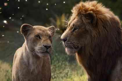 Le Roi Lion - Photo 2
