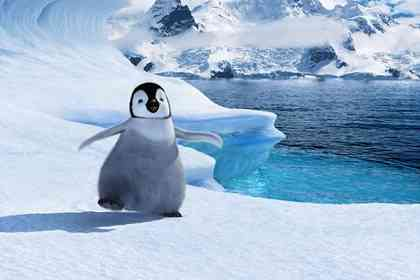 Happy feet - Photo 1