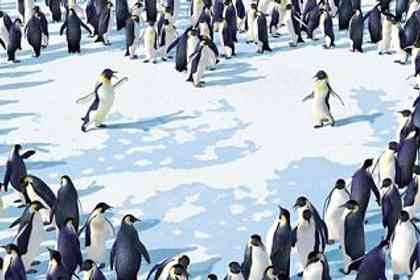Happy feet - Photo 11