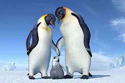 Happy feet - Photo 5
