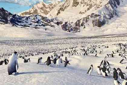 Happy feet - Photo 8