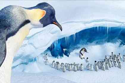 Happy feet - Photo 9