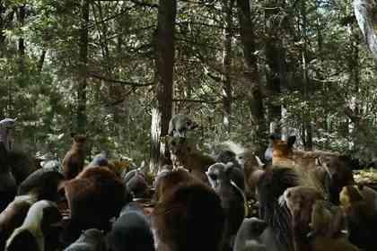 La Forêt contre-attaque - Photo 11