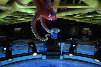 Finding Dory - Foto 3