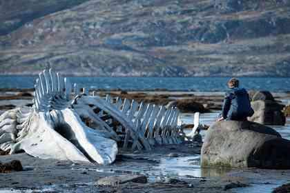 Leviathan - Foto 1