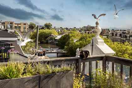 De Wilde Stad - Foto 1