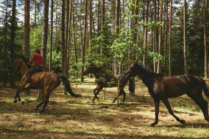 Out Stealing Horses - Foto 2
