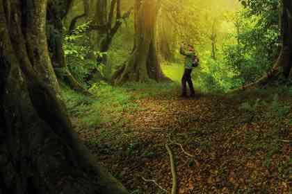 The Hidden Life of Trees - Foto 1
