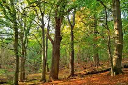 The Hidden Life of Trees - Foto 2