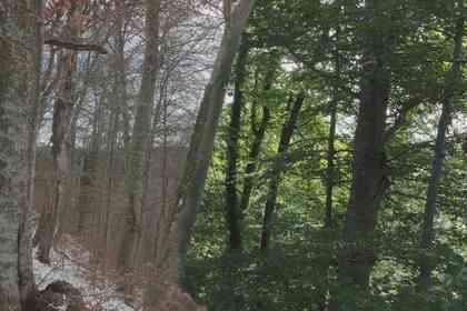 The Hidden Life of Trees - Foto 4