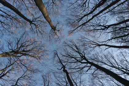 The Hidden Life of Trees - Foto 6