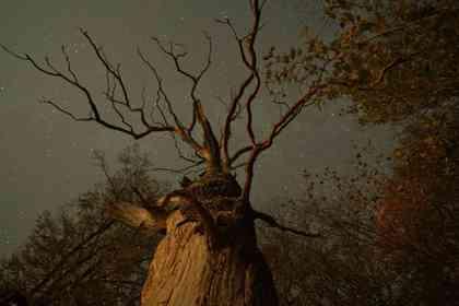 The Hidden Life of Trees - Foto 10