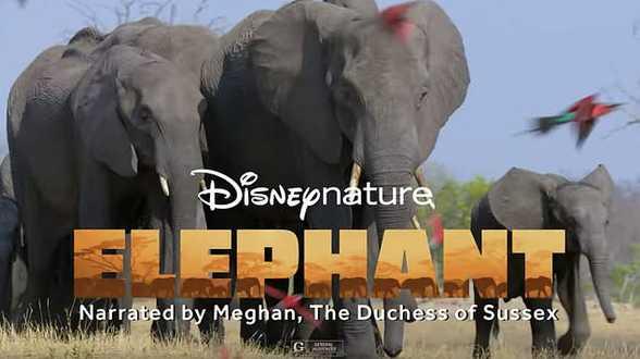 Quittant la vie princière, Meghan raconte celle des éléphants - Actu