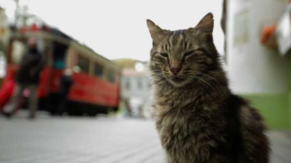 Les 15 meilleurs films pour les amoureux des chats - Actu