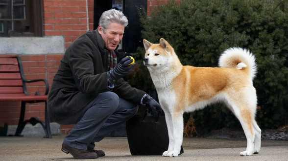 Les 15 meilleurs films pour les amoureux des chiens - Actu
