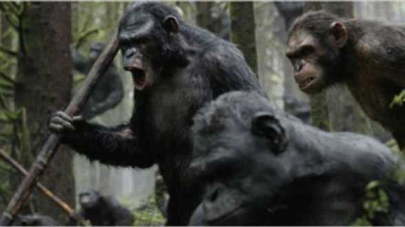 Dawn of the Planet of the Apes, The Raid 2, The Purge 2 : Anarchy ... Votre Cinereview - Actu