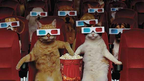 Welke films kan je zoal gaan zien dit verlengd weekend? - Actueel
