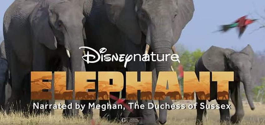 Quittant la vie princière, Meghan raconte celle des éléphants